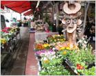 松戸市場店(花木)
